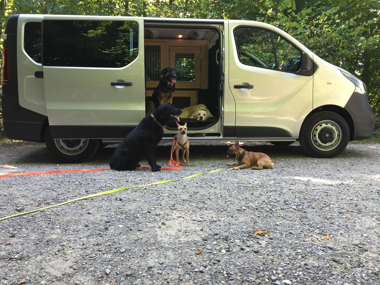 magna-dogs-transporter