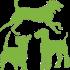 Hundebetreuung und Hundetraining 1-6 mal die Woche